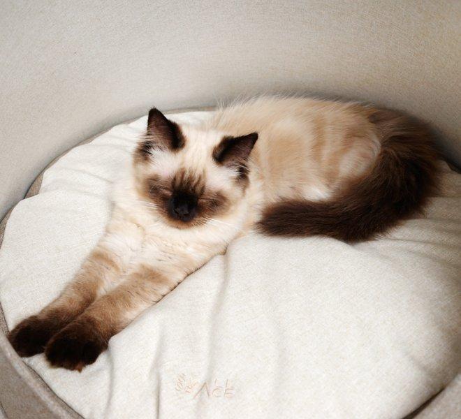 DSC01152-woodbrown-cat-02