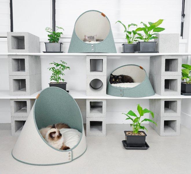 DSC01162-pinegreen-cat-01